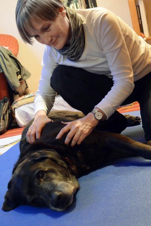 Labrador-Mischling Gismo genießt die B...ng von Physiotherapeutin Ulrike Wiese.  | Foto: Nikola vogt