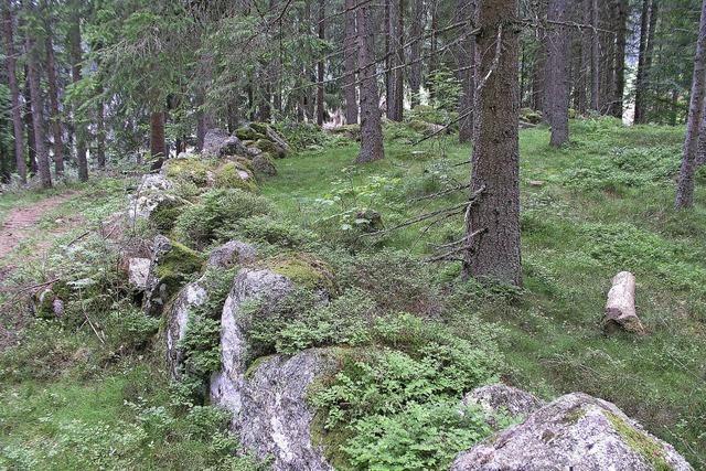 Wanderung zum Steinkreis Blasiwald