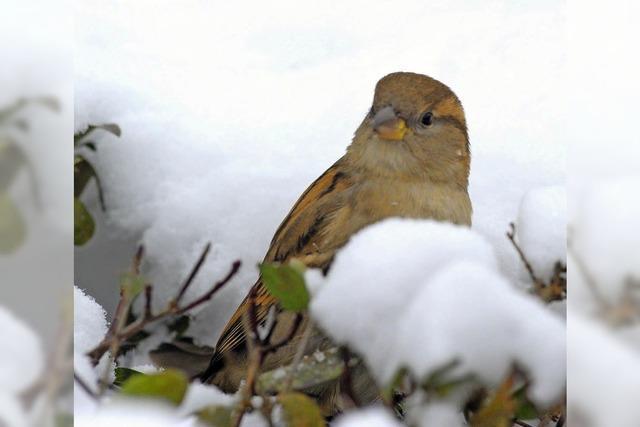 Bei der Mitmachaktion des NABU haben mehr Teilnehmer mehr Vögel gezählt - und Überraschendes entdeckt