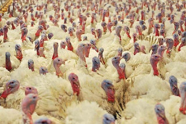 Tiere in Südbaden futtern weniger Antibiotika als der Bundesschnitt