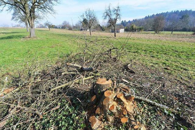 Umstrittenes Baugebiet: Bäume abgeholzt – Kritik von Aktivisten