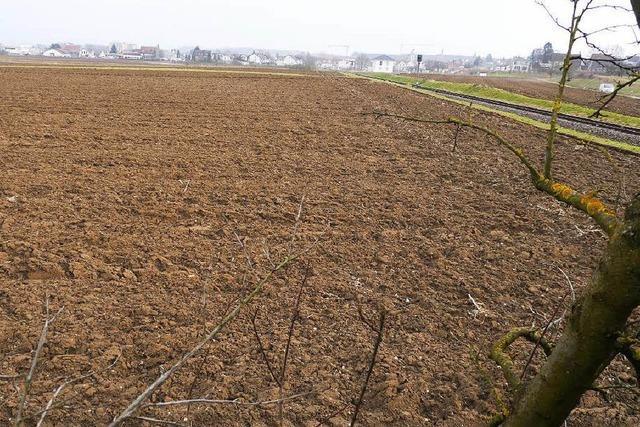 Neubaugebiete verdrängen Acker: Landwirte in Sorge