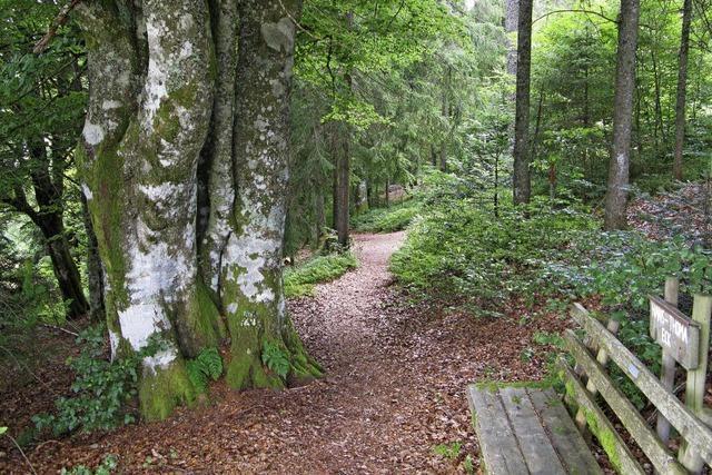 Wald muss viele Funktionen erfüllen