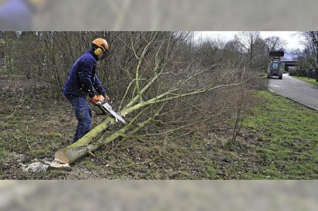 Baumfällarbeiten am