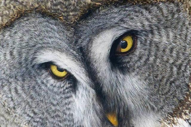 Besucherrekord beflügelt Zoo-Freundeskreis