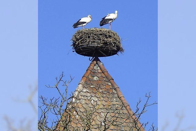 Neues Nest für die Schloss-Störche