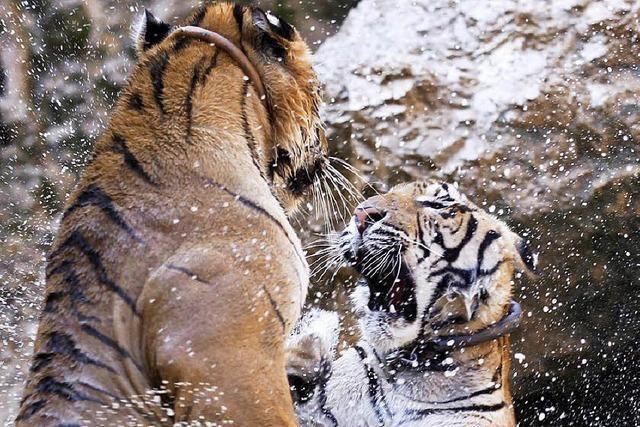 Tierschutz bekommt in Asien mehr Aufmerksamkeit