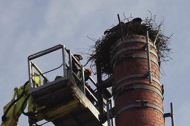 Abbau von Storchennest sorgt für Aufregung in Wyhl