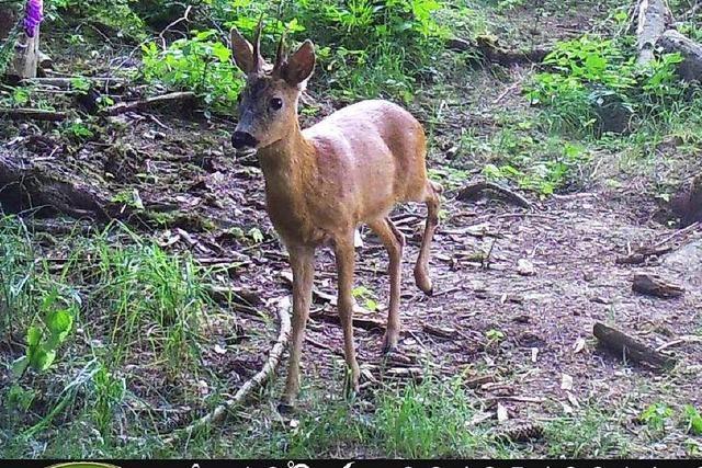 Datenschützer machen gegen Wildkameras in Wäldern mobil