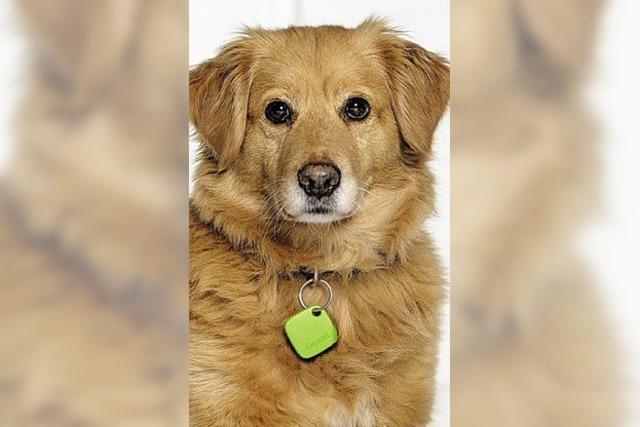 Ein Wachhund für den Hausschlüssel