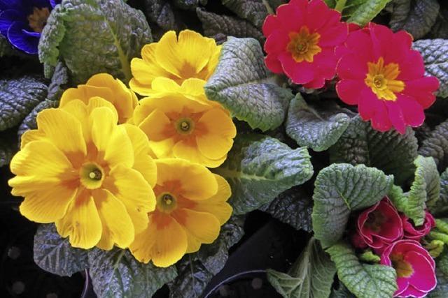 Weil-aktiv verteilt bunte Frühlingsgrüße