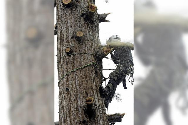 Mammutaufgabe für den Baumfäller