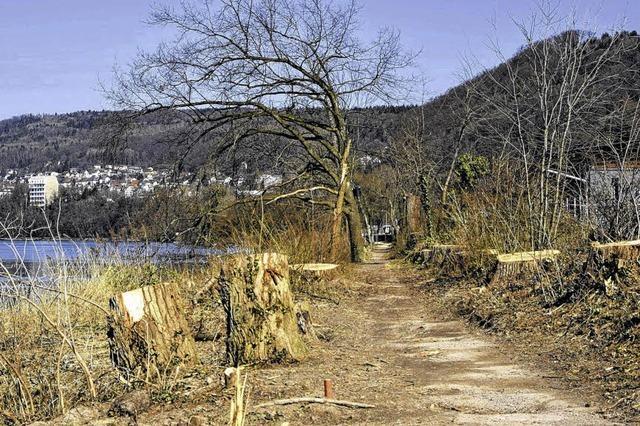 Waldshuter Rheinweg wird grüner