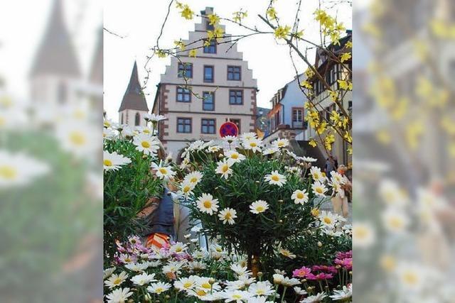 Blumen- und Antikmarkt in Endingen