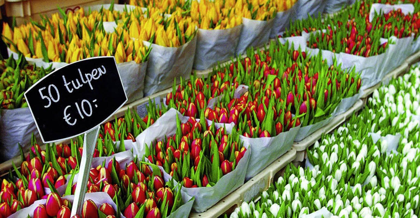 Günstig: Tulpen auf dem Blumenmarkt am Münzturm     Foto: dpa