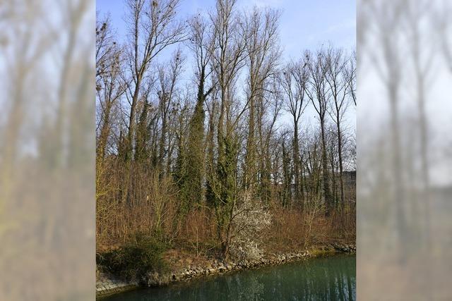 Drei Standorte für eine neue Halle in Breisach