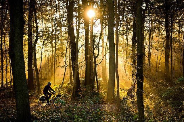 Warnung am Tag des Waldes vor Zersplitterung der Wälder