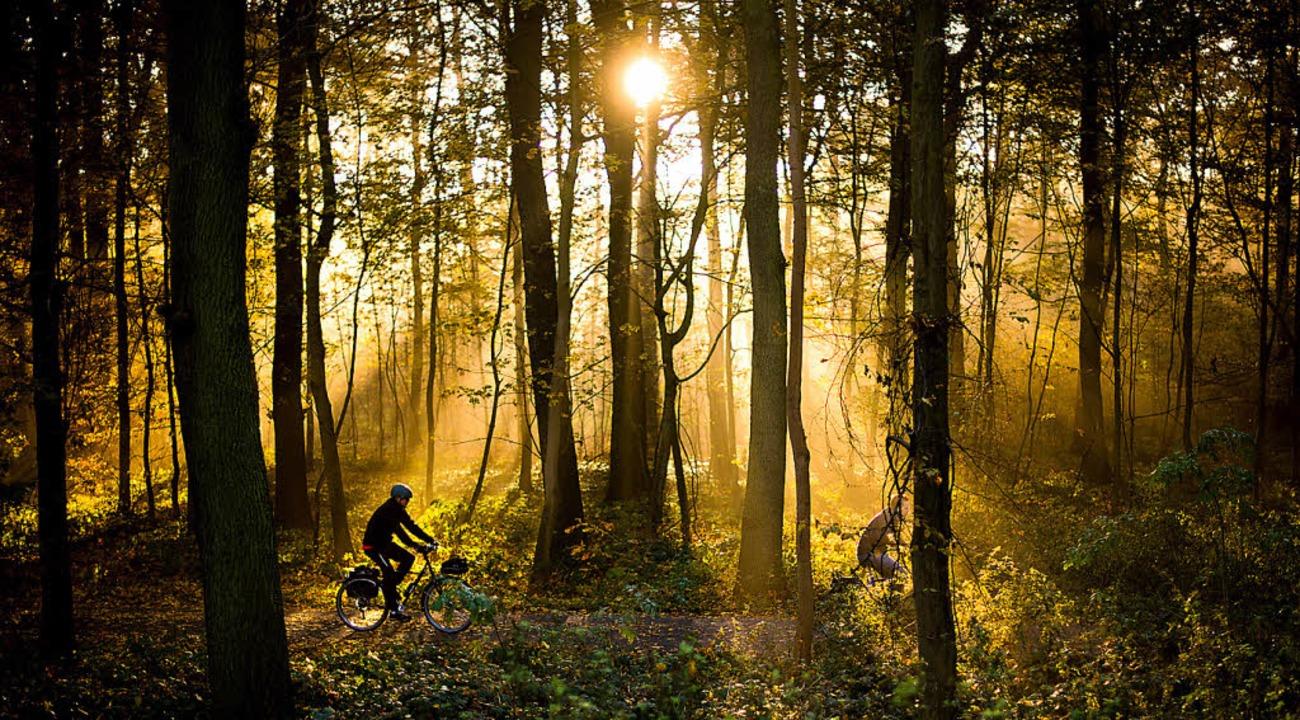 Durch fast jeden Wald führen mittlerwe...en – ein Problem für die Tiere.   | Foto: dpa