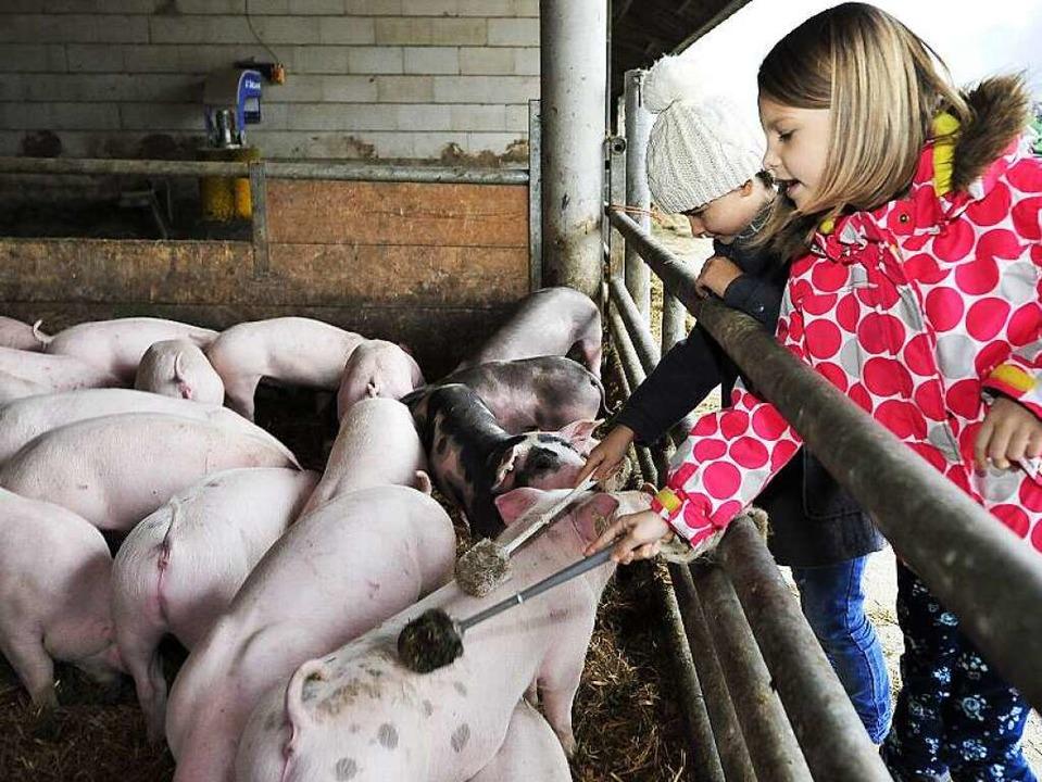 Attraktion: Schweinemassage mit der Klobürste   | Foto: Thomas Kunz