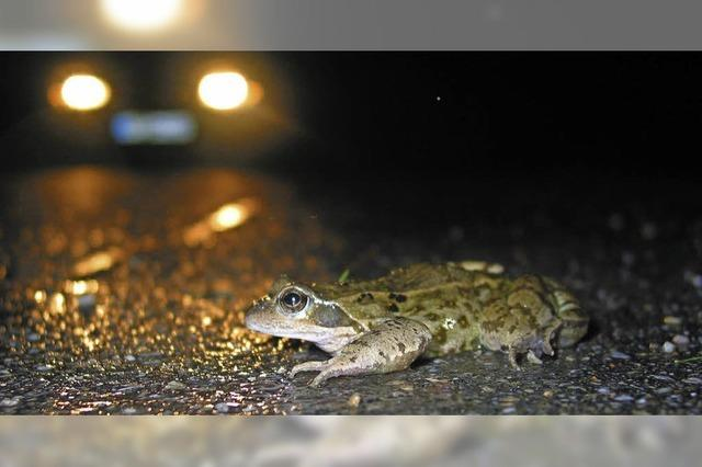 Amphibien durch Zaun wieder geschützt