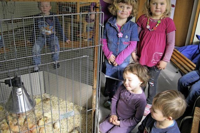 Küken schlüpften im Kindergarten St.Konrad