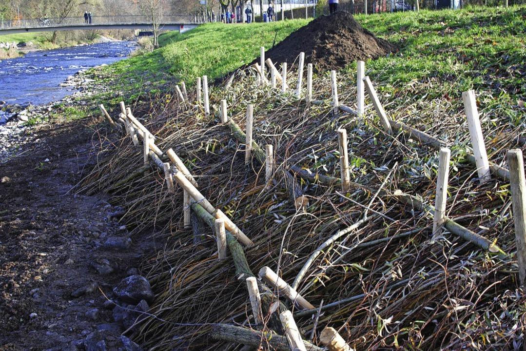 Weidenspreitlage an der Dreisam,  angelegt im November.   | Foto: Fri
