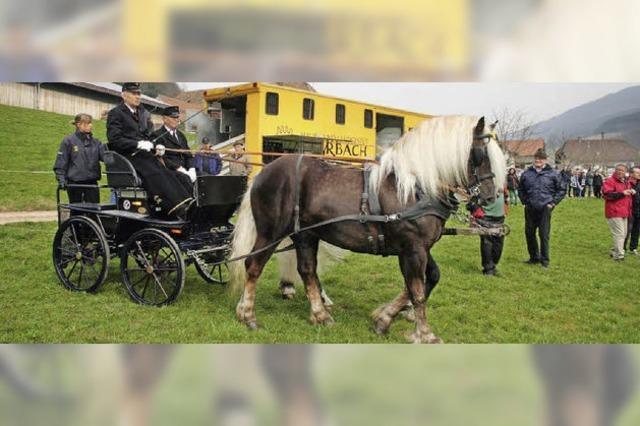 Schwarzwälder Pferdezuchtgenossenschaft: Prächtiges Schwarzwälder Kulturgut