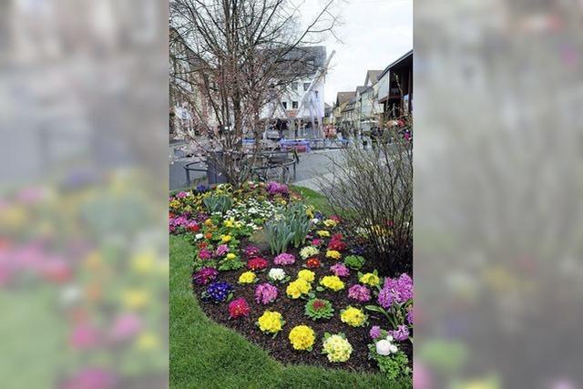 Nieselregen auf Frühlingsblumen