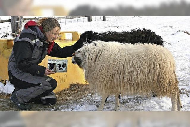 Überleben im Schafspelz