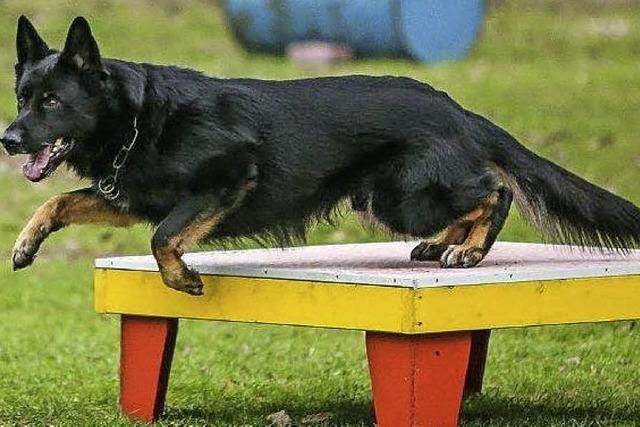 Ausbildung von Rettungshunden