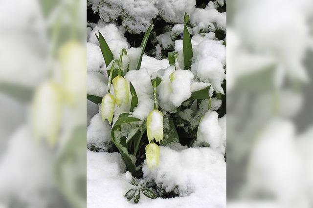 Schnee an Ostern kommt oft vor