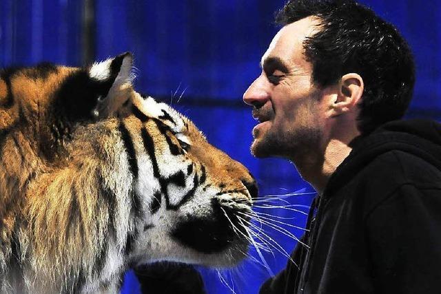 Dompteur Christian Walliser schmust noch immer mit seinen Tigern