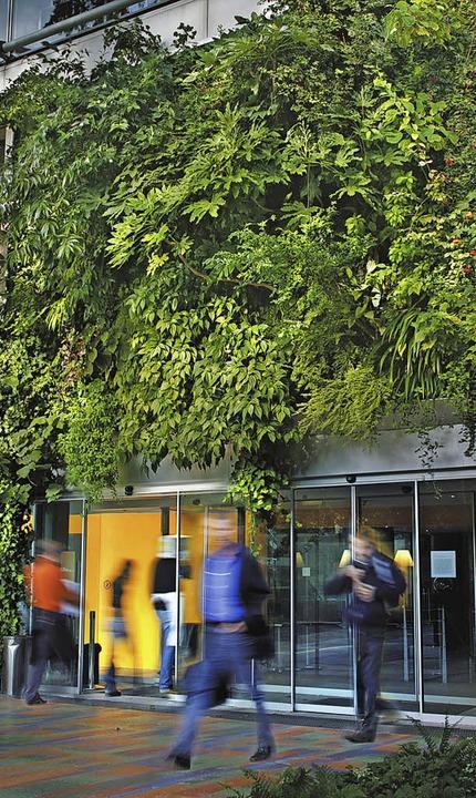 Die Begrunte Wand Haus Garten Badische Zeitung