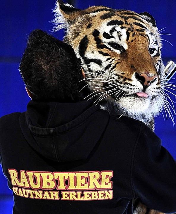Christian Walliser und einer seiner Tiger.    Foto: Thomas Kunz