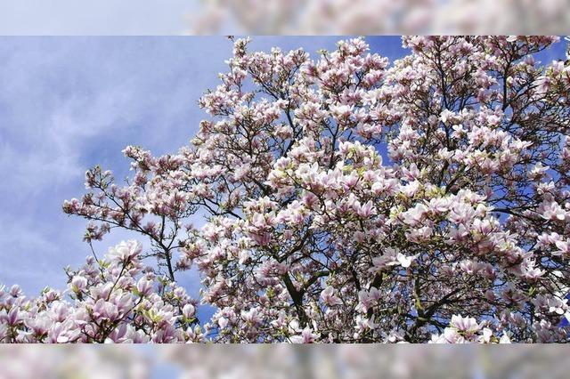Sagenhafte Blütenpracht