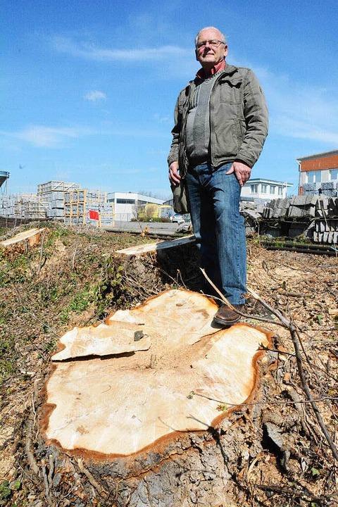 Kontrolleur Helmut Ruser vor dem Stumpf einer der gefällten Pappeln  | Foto: Hannes Lauber