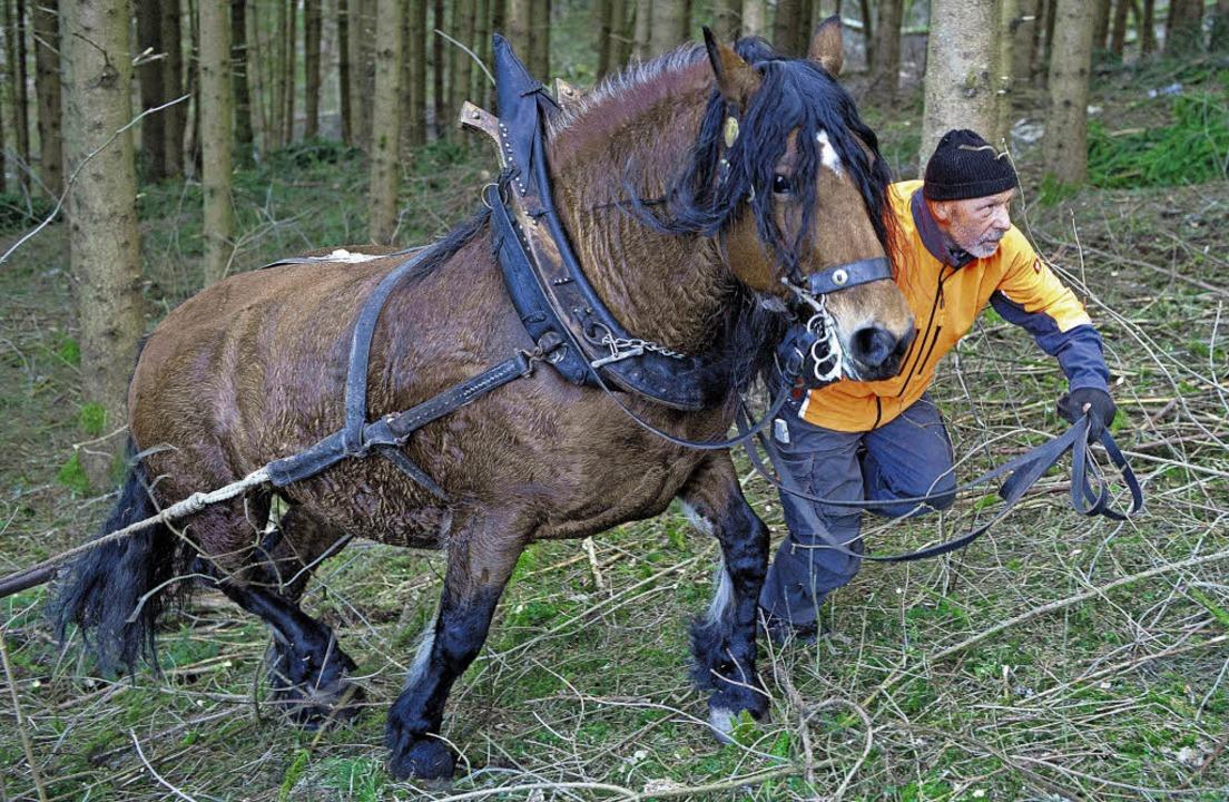 Pferdezüchter Werner Blattert beim Hol...er braunen Staatsprämienstute Amelie.   | Foto: Scheu