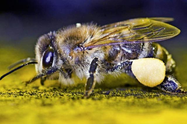 10 000 Flüge für einen Löffel Honig