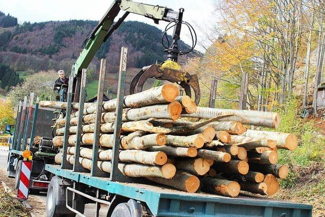Wald bringt weiter hohe Gewinne