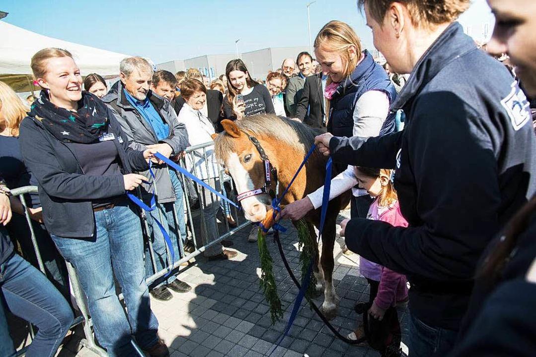 Die zwölfjährige Ponystute aus Rust ve... Krämer-Pferdesport auf Dyn A 5 durch.  | Foto: Olaf Michel (Bilder-Michel.de)