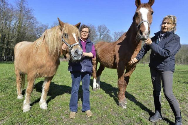Hochbetagte Pferde leben in einer Senioren-WG mitten im Mooswald