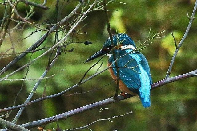 Wie das Rieselfeld zu einem Naturschutzgebiet kam