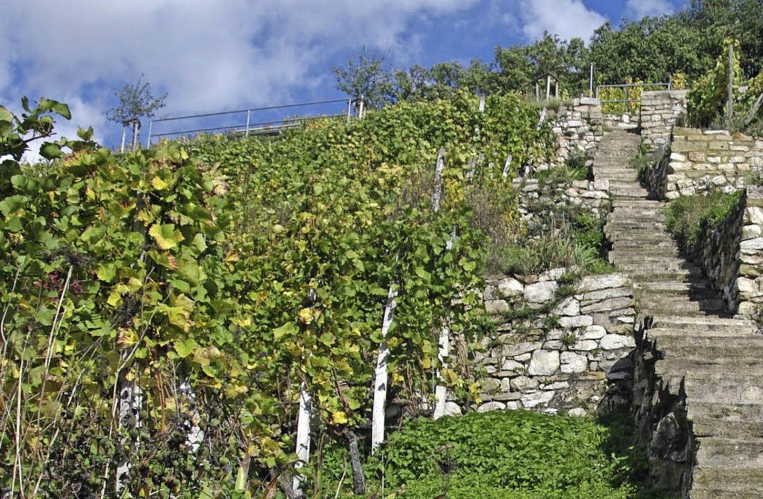 Am Castellberg wird die Anstrengung au...grandiose Ausblicke wiedergutgemacht.   | Foto: martin pfefferle