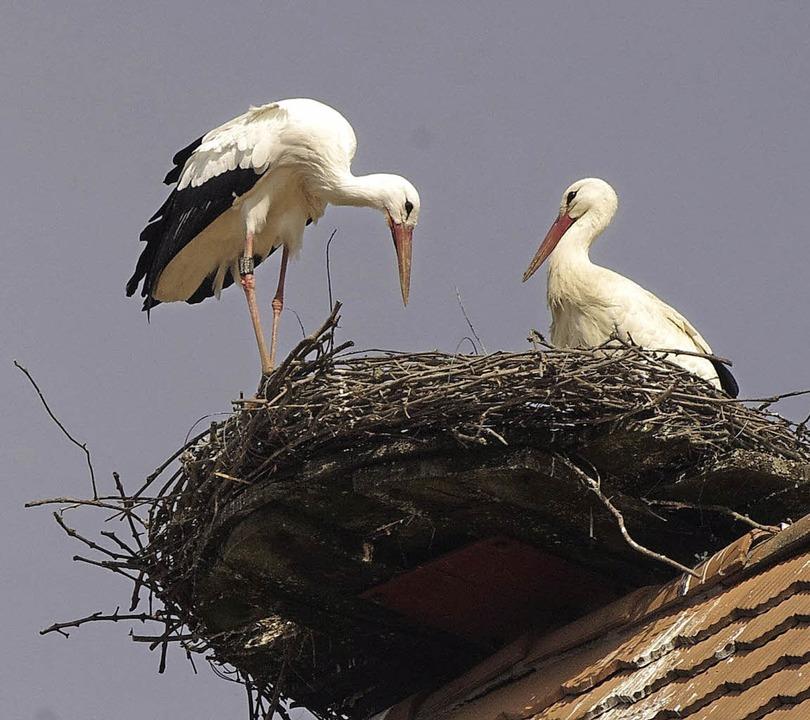 Ein Storchenpaar nistet auf dem Dach der    Frick-Mühle.       | Foto: Privat