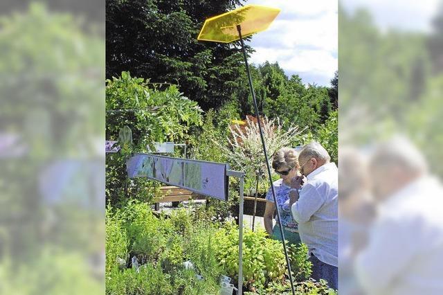 Kreative Ideen für den Garten