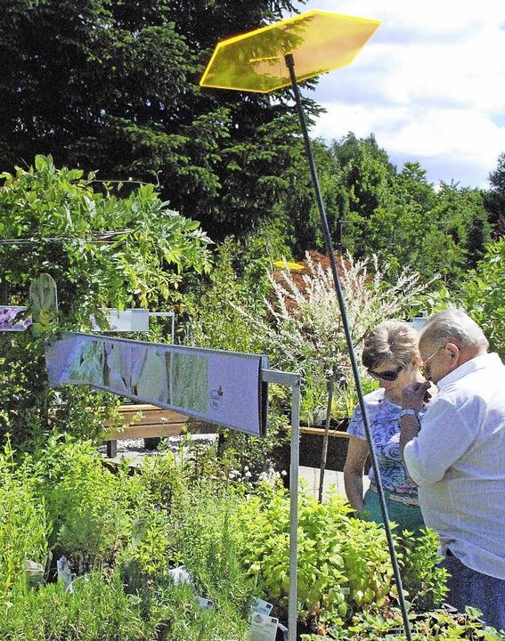 Kreative Ideen für den Garten - Kollektive - Badische Zeitung