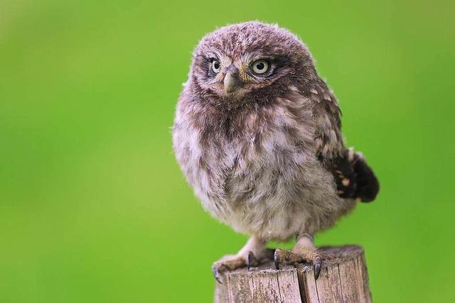 Der Lahrer Naturschutzbund zieht Bilanz