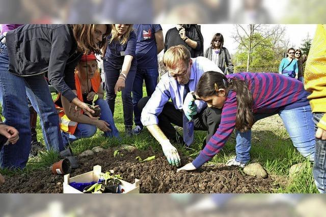 In Freiburg vedrängen Baugebiete die Kleingärten - aber Urban Gardening ist in