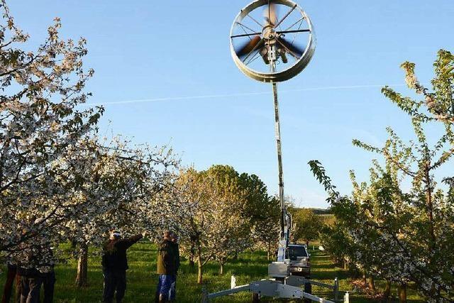 Windmaschine bläst durch Leiselheimer Obstanlagen - warum?