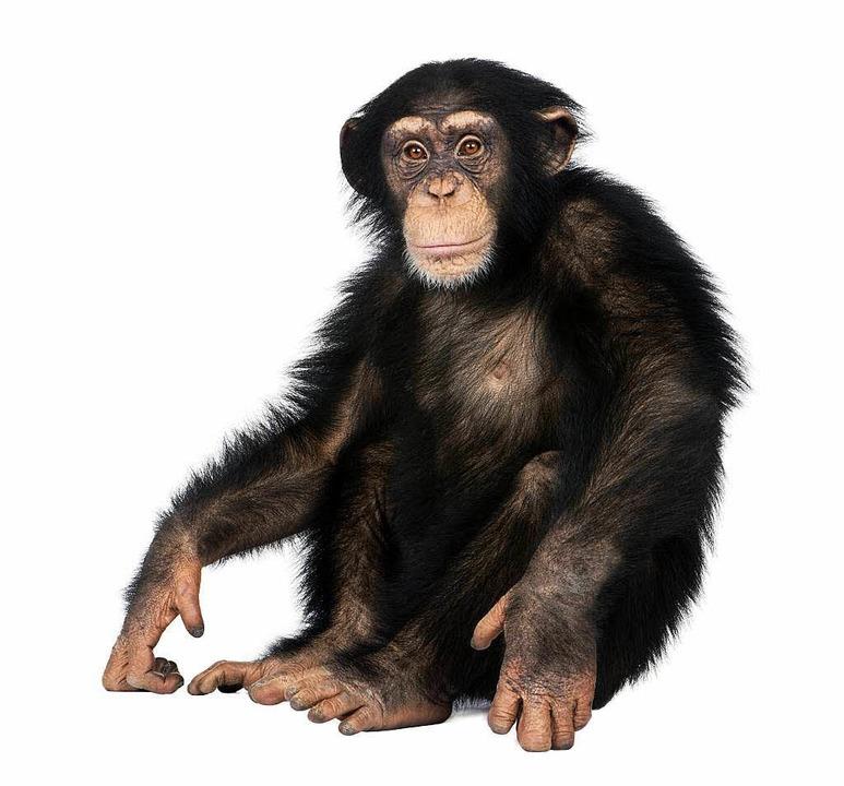 Sollten auch Schimpansen Rechte haben?  | Foto: E. Isselée (Fotolia.com)